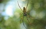 Arachnida Class