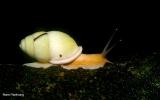 Mollusca Phylum