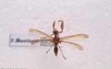 Neuroptera Order