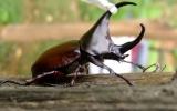 Coleoptera Order