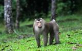 Primates Order