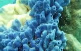 Porifera Phylum