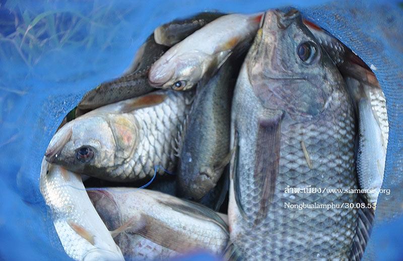 ส่วนใหญ่ได้ปลาแบบนี้