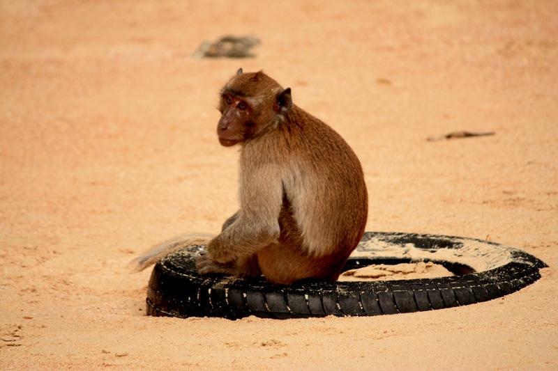 ลิงเหงา