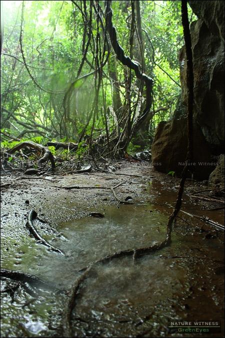 รออยู่นานสองนาน ฝนก็หยุด และ น้ำท่วมป่าสมใจ (พอดีอยากถ่าย อิอิ)