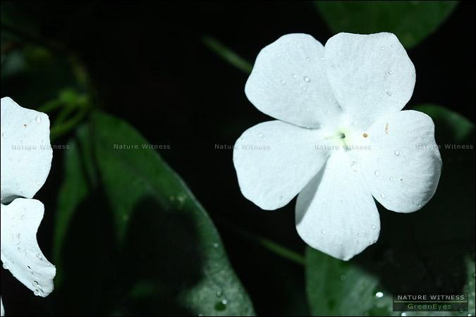 ดอกไม้อะไรเอ่ย