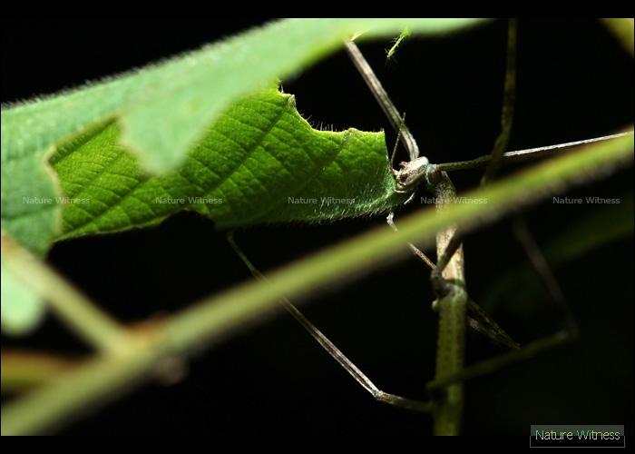แมลงกิ่งไม้ 7
