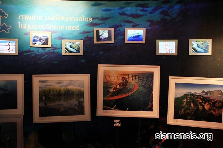 ภาพประกวดทะเลไทย มุมมองวิทยาศาสตร์ ของ สสวท.