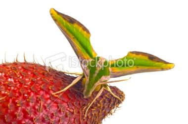 17718561-17718561-moth.jpg