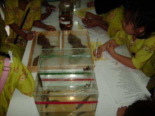 มีสัตว์ต่างๆ ให้เด็กๆ ชม และศึกษา