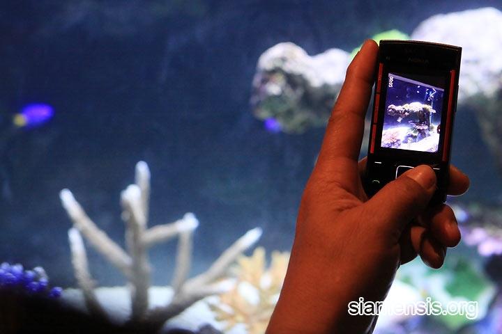 ตู้ปลาทะเล ปะการัง