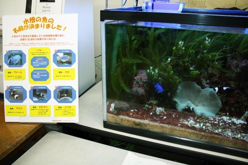 สมาชิกปลาการ์ตูนที่ห้องสมุด Tokyo Univ. of Marine Sciences