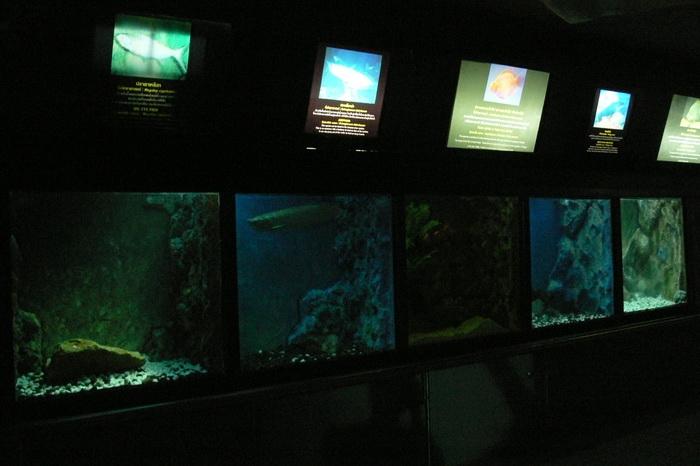 ตู้แสดงพันธุ์ปลาน้ำจืด