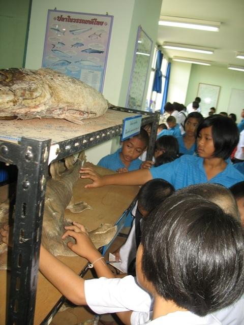 ถัดมาก็เป็น ปลาสต๊าฟ พวกทูน่า ฉลาม โนนิน กระเบน