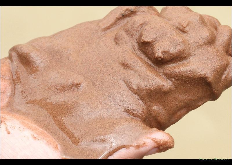 ลักษณะดินตะกอน เป็นดินทรายแบบเดียวกับในไร่