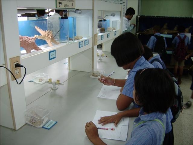ถัดมาก็เป็นสัตว์ไม่มีกระดูกสันหลังพวกหอย ปะการัง ฟองน้ำ ปลาดาว