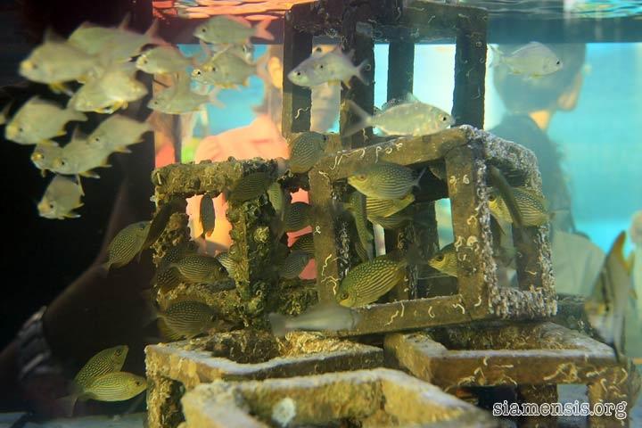 ตู้จำลองแนวปะการังเทียม ^^