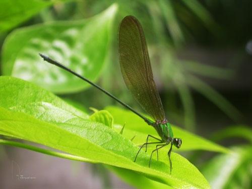 Dragonfly8.jpg