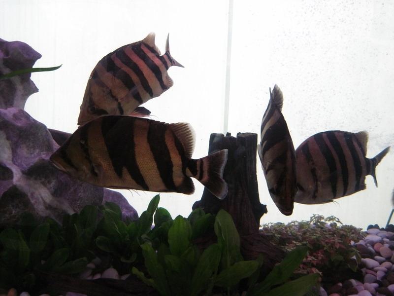 หมู่ปลาเสือตอ