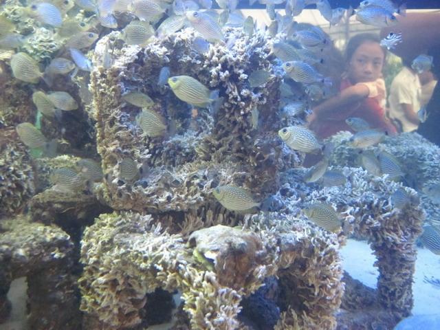 แนวปะการังเทียมจำลอง