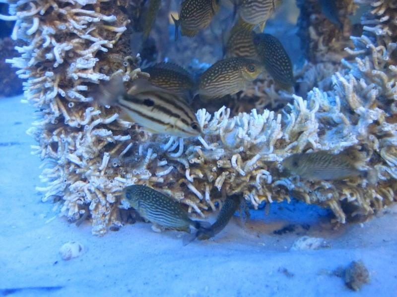 ปะการังจำลอง