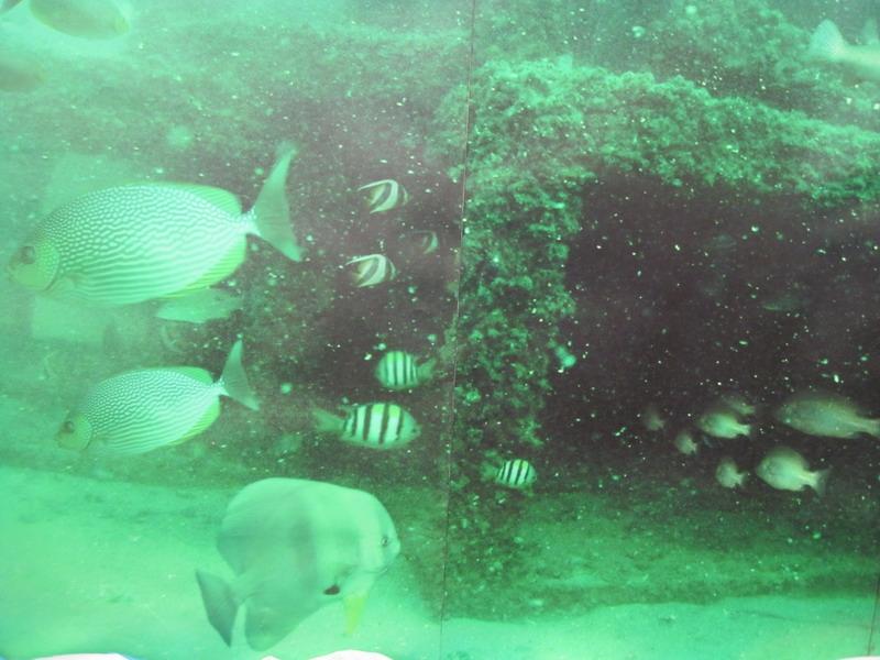 ภาพแนวปะการังเทียม