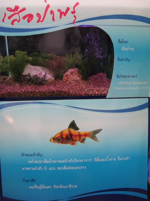 ตู้ปลาเสือป่าพรุ