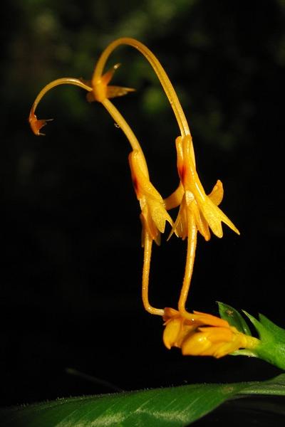 ช่อดอก-ข้าง