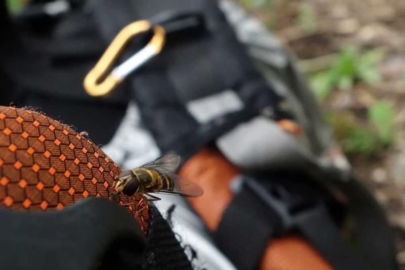 แมลงชนิดสอง01.jpg