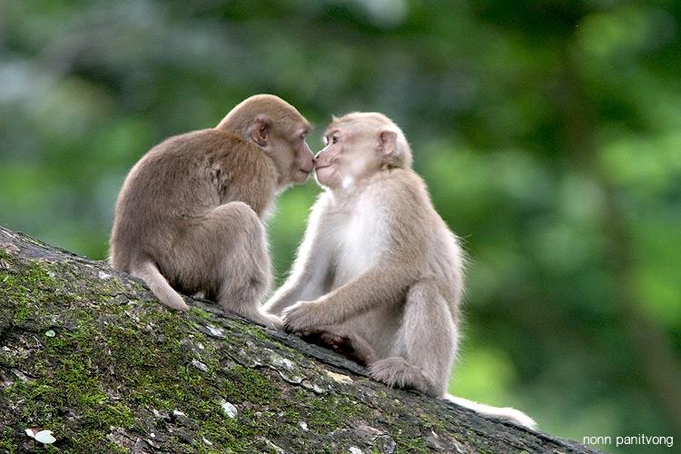 assam_kiss.jpg