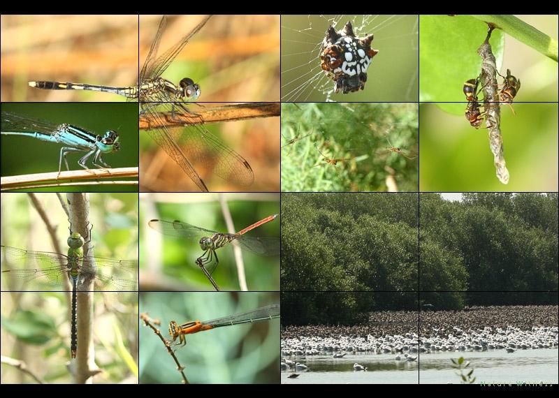 ครั้งนี้เน้นดูแมลงปอ