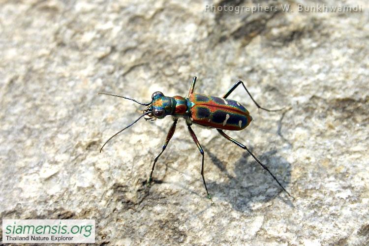 beetle7.jpg
