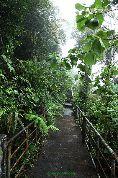 ทางเดินยกพื้น ลัดเลาะไปในป่า เดินสะดวกสบาย