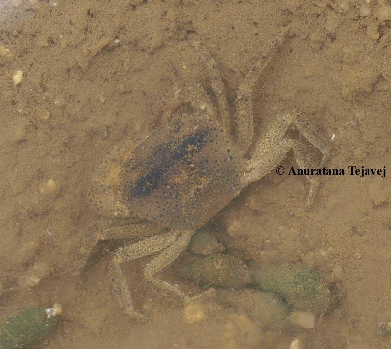 crab-2-at.jpg