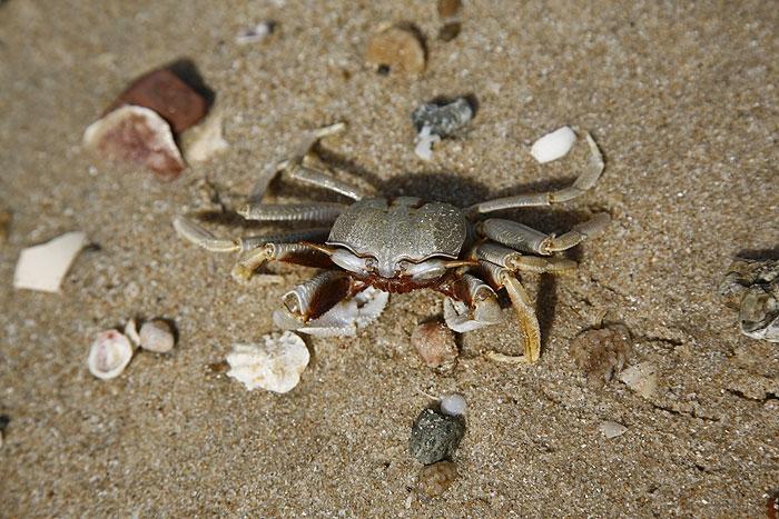 crab1.jpg