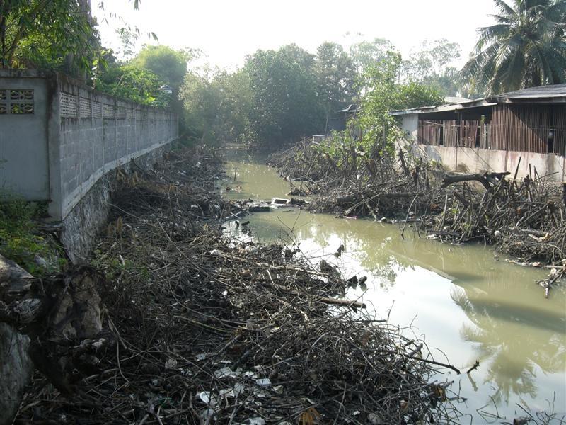 ภาพการตัดทำลายป่าโกงกางเพื่อทำแนวท่อคอนกรีตแทน