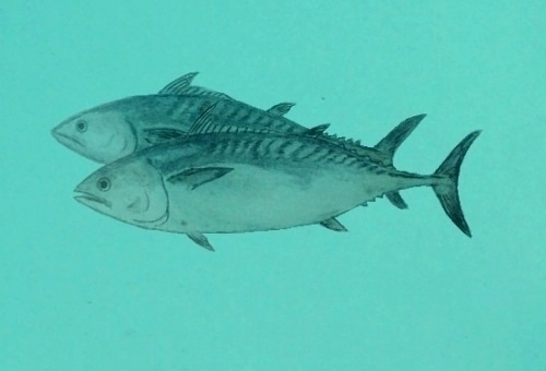 ปลาโอลาย
