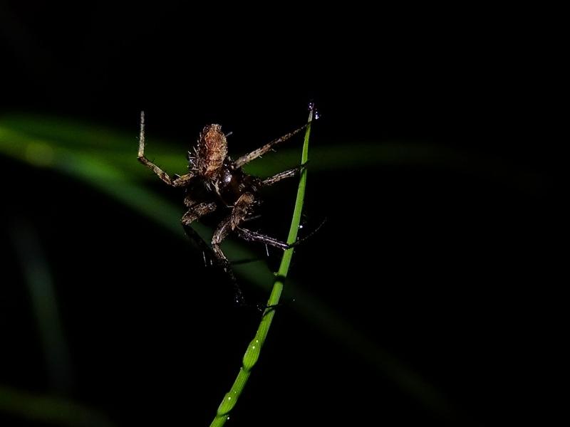 แมงมุมอะไรครับตัวนี้