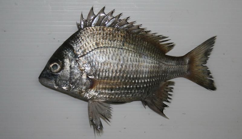 fish0031.jpg