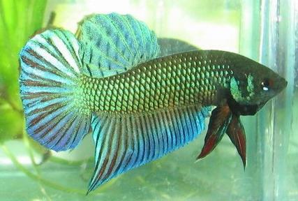 fishe06337.jpg