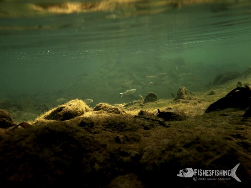 ภาพใต้น้ำลำธารก่อนถึงแม่น้ำสาละวิน