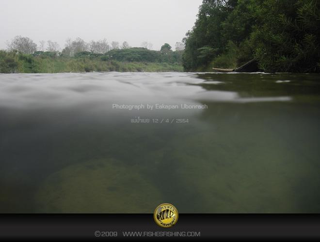 fishesfishing11.jpg