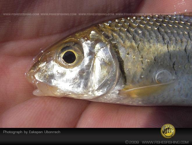 fishesfishing13.jpg