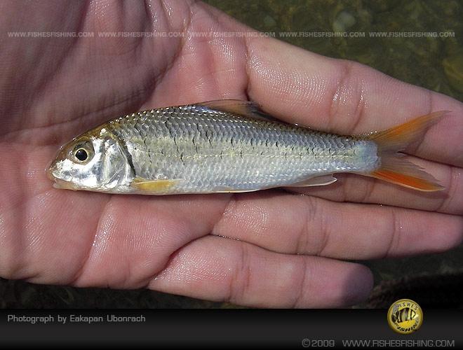 fishesfishing14.jpg