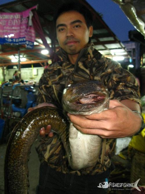 แวะตลาดถ่ายภาพปลาตูหนาจากแม่น้ำสาละวิน