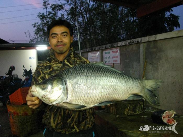 ปลากระโห้อินเดียก็มีครับ