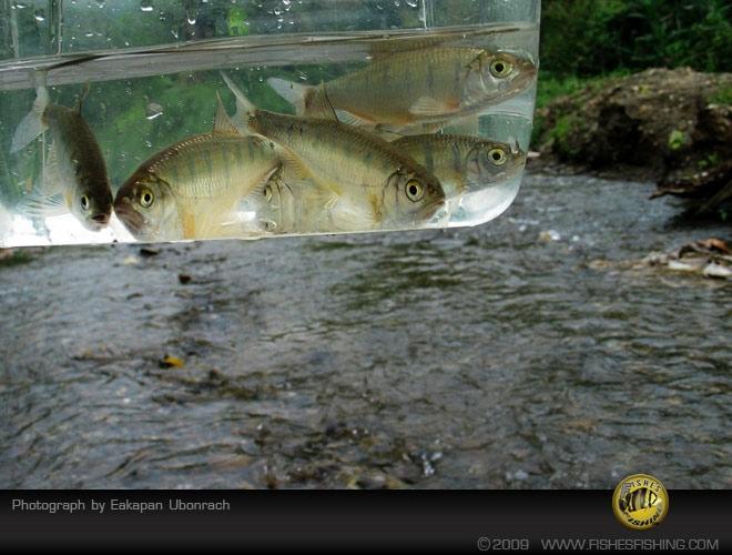 fishesfishing38.jpg