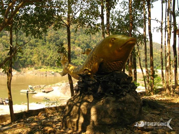 เมื่อ6ปีที่แล้ว ตรงนี้ยังเป็นปลาเวียนอยู่เลยครับ ทำไมกลายเป็นปลาทองไปซะแล้ว