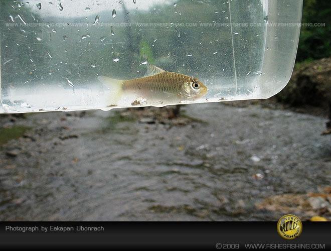 fishesfishing45.jpg