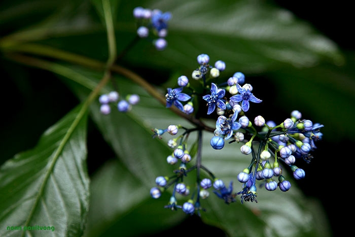 flo_blue.jpg